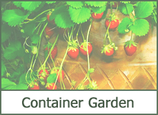 garden containers
