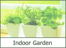 indoor garden plants ideas types pictures photos