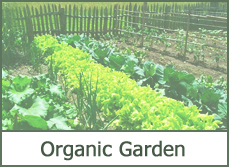 organic garden ideas designs pictures
