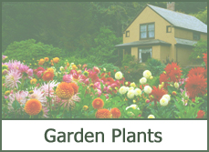 garden plants designs ideas pictures