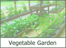 vegetable garden designs pictures ideas