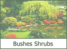 landscaping bushes designs ideas plans