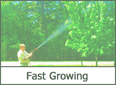 fast growing trees shrubs ideas types pictures