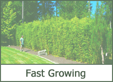 Best types of hedges for landscaping designs pictures ideas for Fast growing fence covering plants
