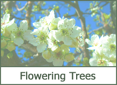 flowering shrubs bushes plants