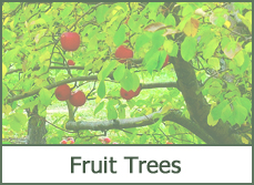 fruit trees plants ideas types pictures
