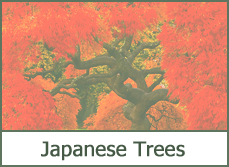 japanese tree designs ideas photos plans