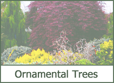 ornamental trees types varieties pictures