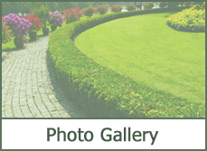 landscape plant photos pictures image gallery