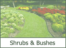 landscaping designs with shrubs