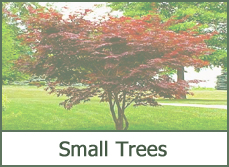 small trees for landscaping small gardens photos ideas designs