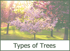 landscaping trees designs ideas photos