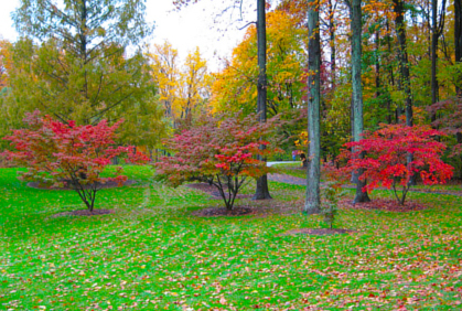 Dwarf trees for landscaping bing images for Best dwarf trees for front yard