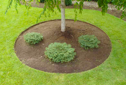 Easy Landscape Lawn Edging Ideas U0026amp; Best Border Designs