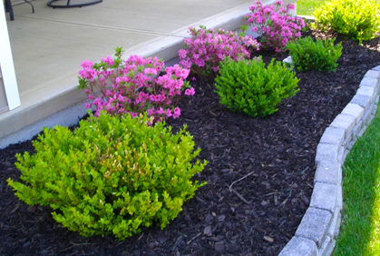 cool flower bed fillers photos best idea home design