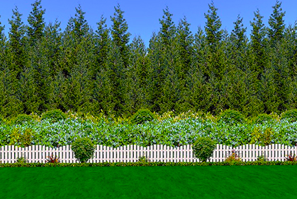 Best Privacy Trees Hedges Shrubs With Landscaping Ide