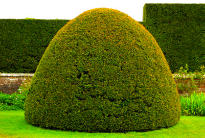 Large shrub ideas pictures and designs for shrubs bushes and landscaping plans.