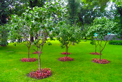 Top small trees for landscaping small gardens photos for Ideal trees for small gardens