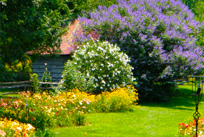 Top Small Trees for Landscaping & Small Gardens Photos