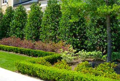 Landscaping ideas for small yards 2017 2018 best cars reviews - Evergreen landscaping ideas ...