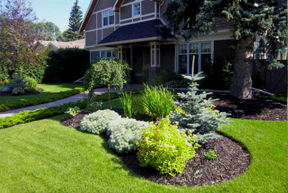 Do it yourself landscaping your guide to great home design ideas hq - Evergreen landscaping ideas ...
