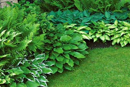 Landscaping Plants For Shaded Areas Ideas Designs Photo