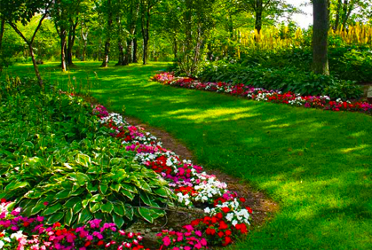 Landscape plants for shaded areas, backyards with palm ...