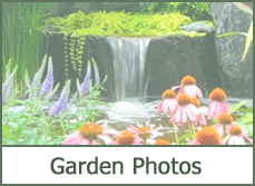 Pictures of Flower Garden Ideas