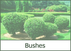 DIY landscaping bushes designs ideas plans