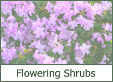 Best flowering shrubs bushes plants for landscaping
