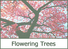 best dogwood types varieties trees for landscaping photos