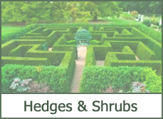 Best hedges designs ideas pictures photos plans