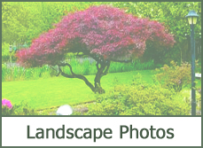 landscaping designs ideas pictures