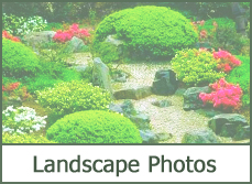 Simple landscaping ideas and pictures