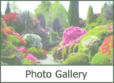 Pictures landscape shrub design ideas and plans.