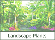 landscaping plant ideas