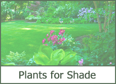 Top 2015 landscape design ideas with plants for shaded areas.