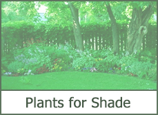 Best shade loving plants with simple landscape design ideas.