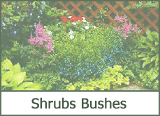 Photos shrubs and bushes for small yard landscaping design ideas
