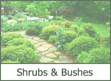 Landscaping Shrubs Ideas
