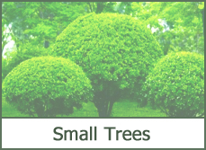 Small dwarf trees and shrubs for landscaping ideas.