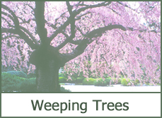 photos weeping trees varieties types of landscaping ideas