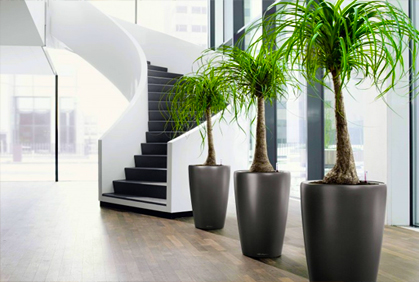 Types of Indoor Trees
