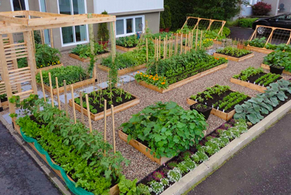 Top Vegetable Garden Ideas for Beginners 2018 Pictures