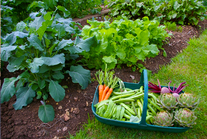 Growing Fruits & Vegetables