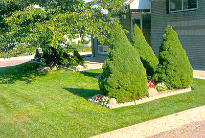 Best Dwarf Trees For Landscaping Photos Ideas Reviews