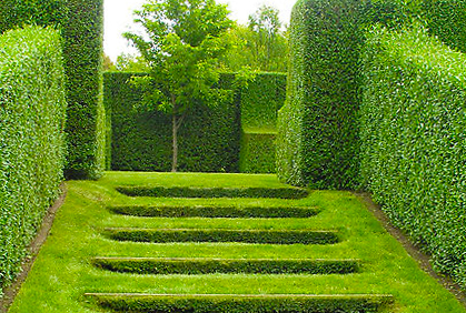 Best Types Of Hedges For Landscaping Designs Pictures I