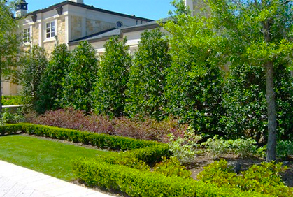 Best privacy trees hedges shrubs with landscaping ide for Garden design ideas with hedges