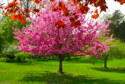 Top Small Trees For Landscaping Amp Small Gardens Photos
