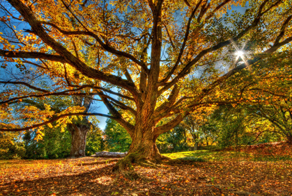 Popular Types of Maple Trees